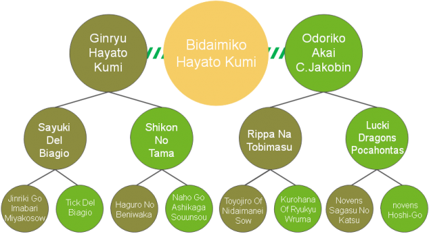 20200421_Pedigrees_Bidaimiko